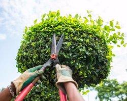 Didier Patrick Espaces Verts et Forestiers - Beure - Réparations